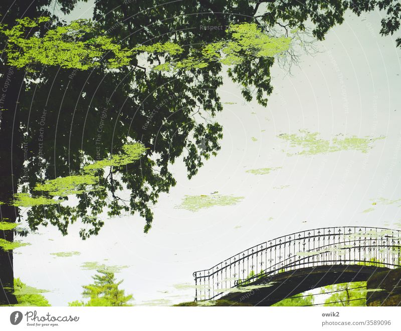 allegory Detail 180° Rotated On the head Mirror image reflection Reflection Pond Park bridge Elegant pile-lander Metal Curved Arched bridge Water
