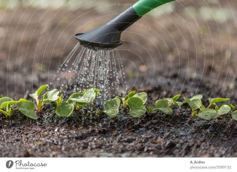 Seedlings are watered Earth spring Garden Gardening Watering can macro Close-up food Nature plants Rain Rainwater Drop Growth Fertile Cast green