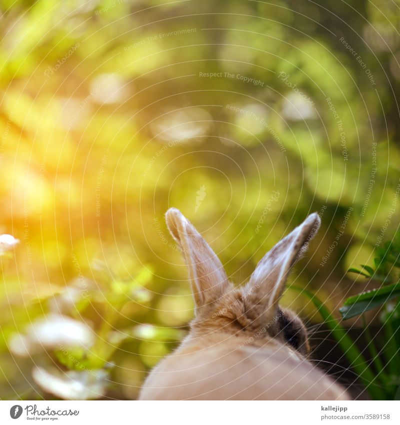 small ear rabbits Hare & Rabbit & Bunny Hare ears rabbit ears Easter Bunny Colour photo Exterior shot Pet Deserted Pelt Animal face Mammal Nature Brown Ear Day