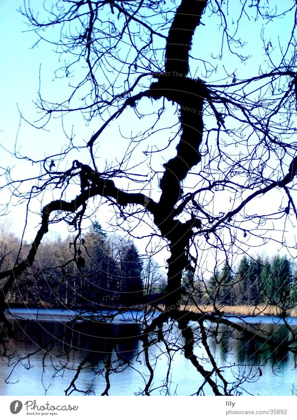 Nature Tree Blue Forest Lake Branch Lightning Branchage Fascinating
