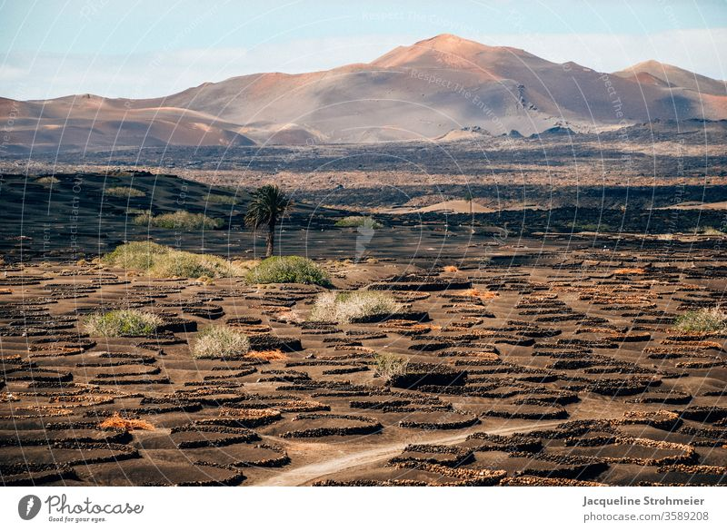 Wine region La Geria, Lanzarote, Spain Canary Islands Canaries volcanic landscape Fuego mountains Mountains of Fire wine-growing area Uga bodega Vine vine plant