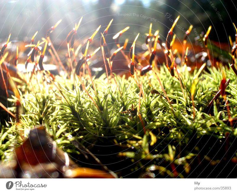 Irradiated Leaf Grass Forest Woodground Autumn Light Sunbeam Green Brown Moss