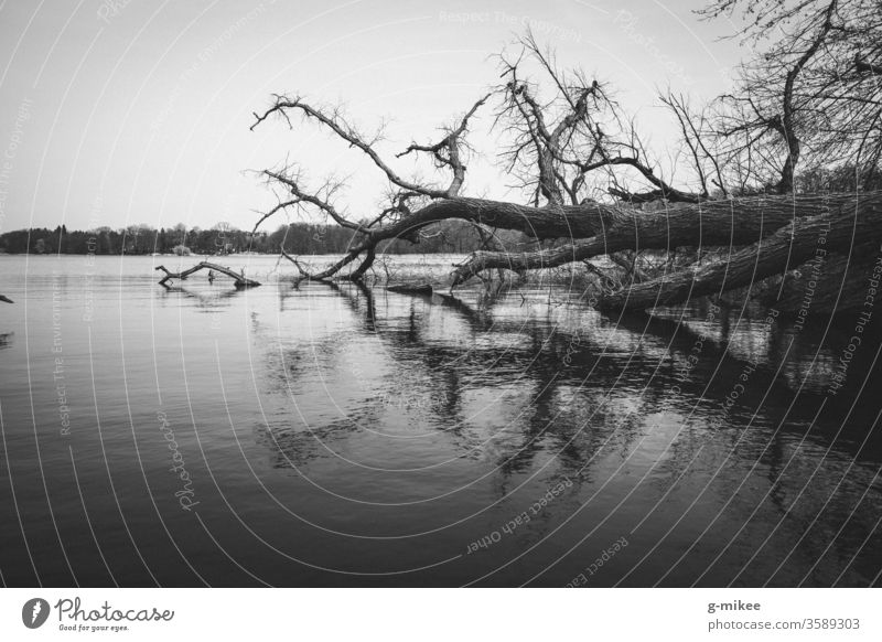 Fallen tree in the lake Lake reflection black-white Forest Nature Park Exterior shot Landscape tranquillity Deserted melancholy Lakeside Environment Calm