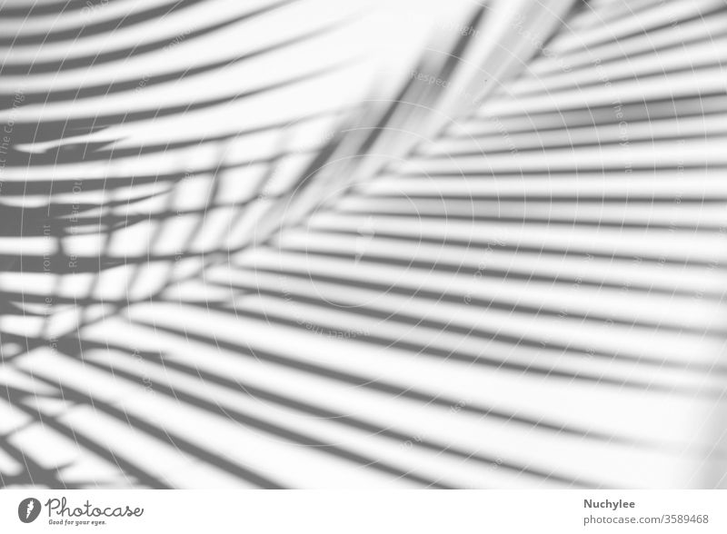 Tropical palm leaves natural shadow overlay on white texture background, for overlay on product presentation, backdrop and mockup, summer seasonal concept shape
