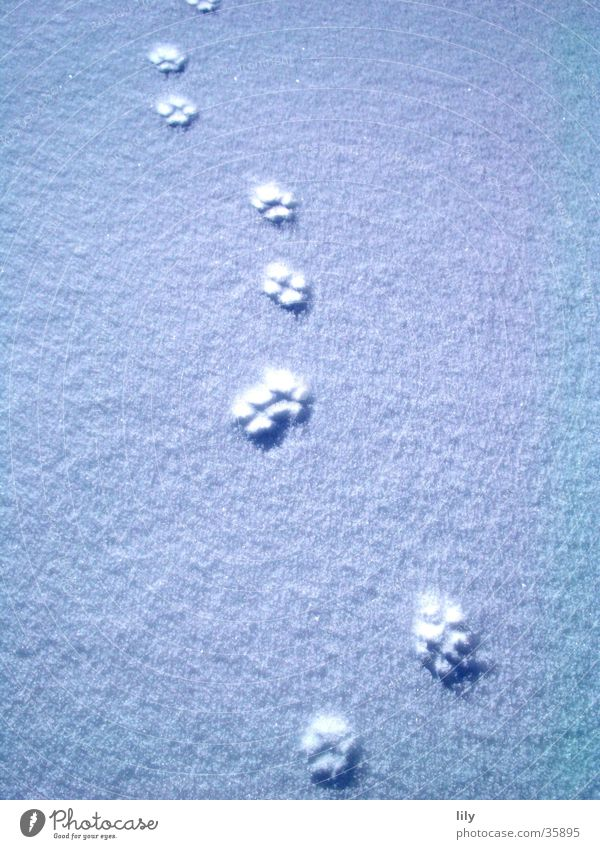 Tracks in the snow #3 Cat Snow layer Mysterious Paw Sun Chase Animal tracks
