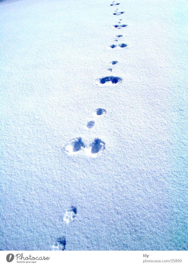 Sun Snow Tracks Mysterious Animal tracks Chase Snow layer