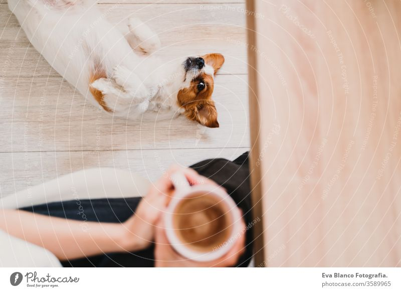 young woman working at home, holding a cup of coffee. Cute small dog lying on the floor. Stay home concept mobile phone technology pet jack russell office