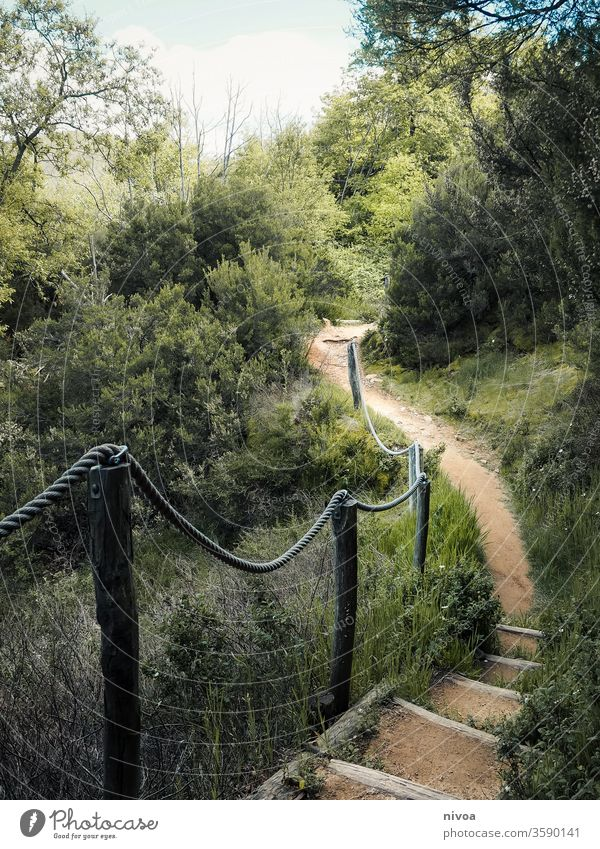 path tuscany Tuscany hike outdoor Italy Vacation & Travel Exterior shot Nature Hiking nature Colour photo Landscape wanderlust Tourism Class outing Adventure