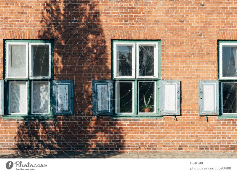 the shadow play on the house wall with Agave in the window as a silent extra Shadow Shadow play Still Life tree Tree trunk Contrast Window shutters Window pane