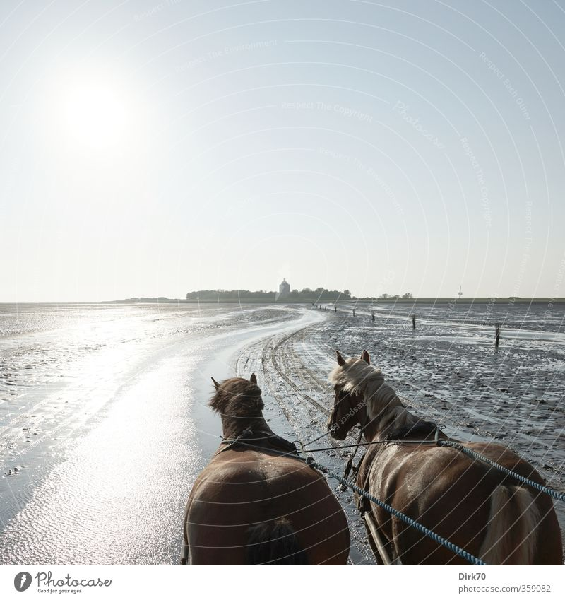 After Neuwerk, towards the sun ... Trip Ocean Island Cloudless sky Horizon Summer Beautiful weather Coast North Sea Tower Lighthouse Horse-drawn carriage Animal