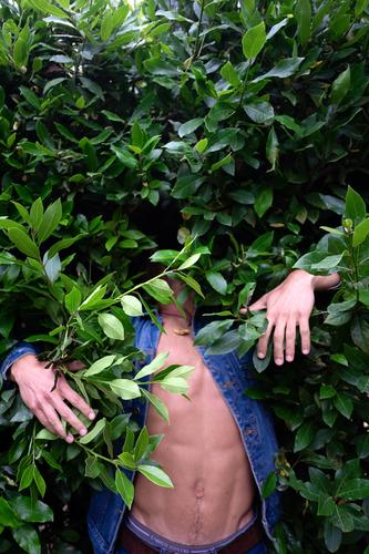 A Young man hidden in green bushes 1 hide jungle leaf person nature people invisible plant young model fashion absurd camouflage tree anonymous teenage face
