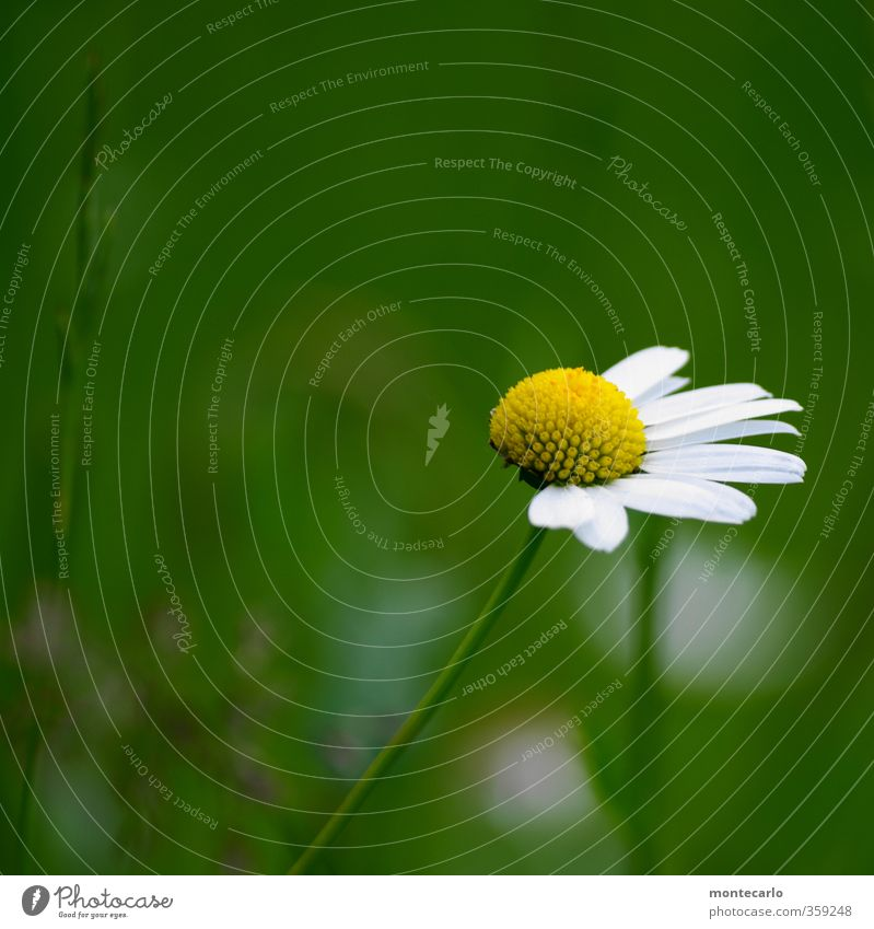 Nature Green White Summer Plant Flower Leaf Environment Yellow Small Blossom Natural Authentic Broken Simple Thin