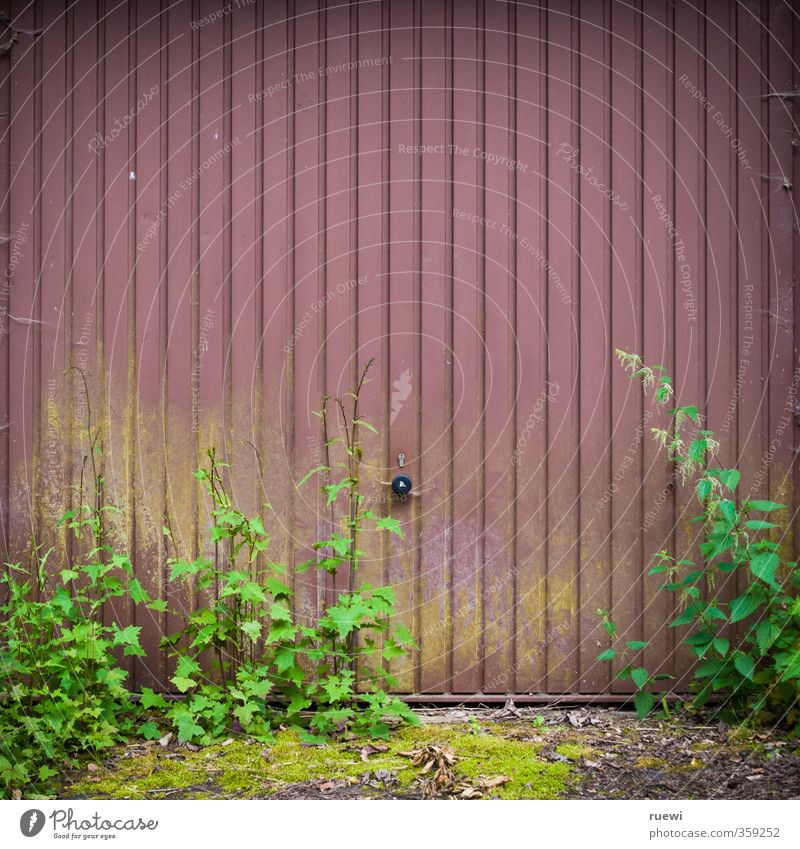 Keep the exit clear! Living or residing Gardening Plant Moss Foliage plant Weed Weed control Stinging nettle Verdigris Gate Building Architecture Garage