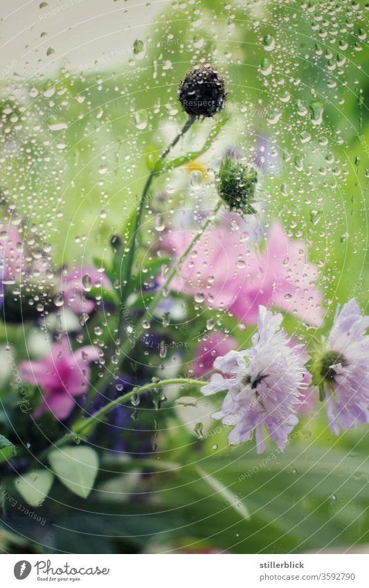 Bouquet of wild flowers behind a rain-wet window pane Rain Drops of water bleed Water Nature Plant Wet Weather