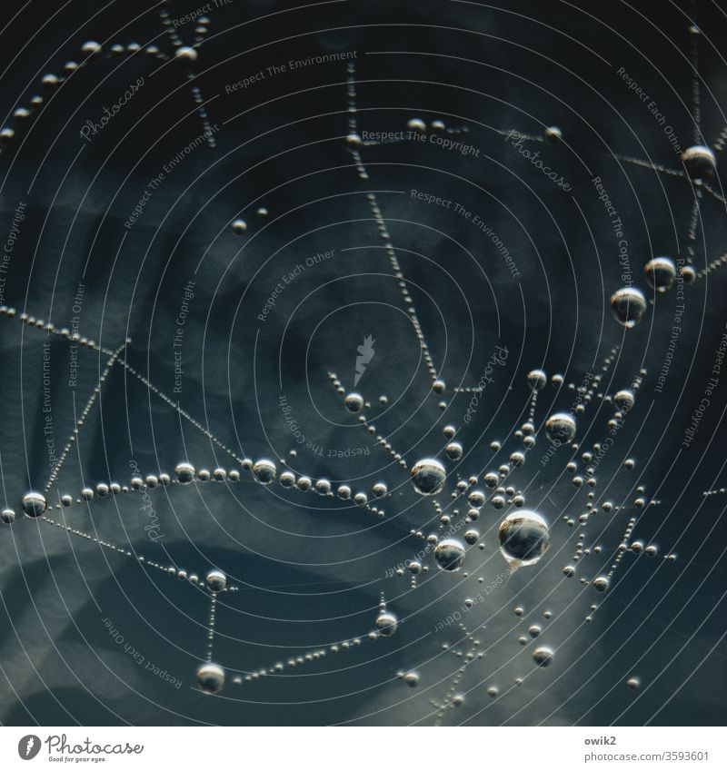 It's stuck Detail Exterior shot Subdued colour Colour photo Delicate Authentic Thin Hover Ease Cobwebby Spider's web Idyll Calm Many Round Fresh Together Small