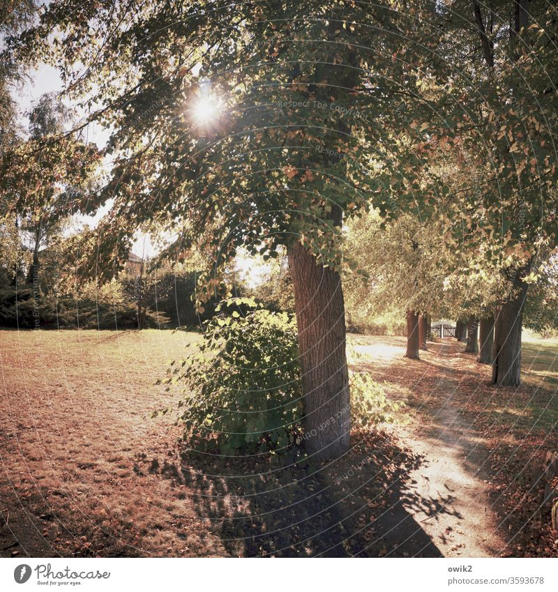out Idyll Lanes & trails Woodground Bushes trees luminescent Brilliant Sunlight flooded with light Back-light clearing Autumn off Deserted Nature Meadow
