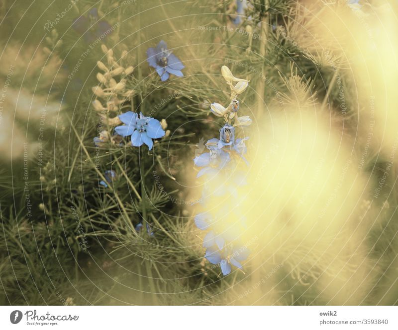 Blue swabs Idyll Meadow little flowers Ground cover plant bleed blossom Small Near Many Motion blur Blur fragrant Nature Plant spring Exterior shot Colour photo
