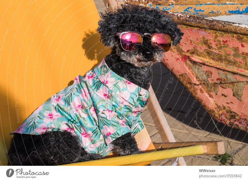 Fancy dog with sunglasses Dog hawaiian shirt Sunglasses Folding chair Deckchair Yellow Summer Vacation & Travel Summer vacation Sunlight Relaxation chill smile