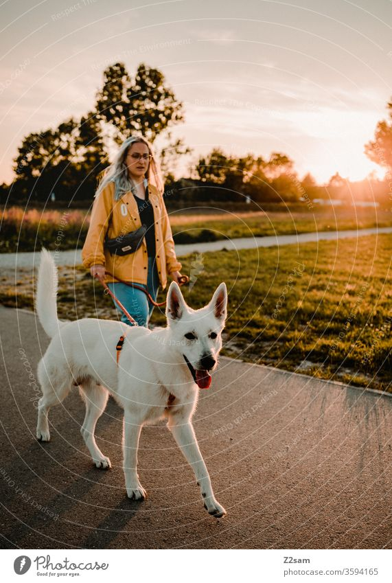 Taking a walk in the evening sun Walk the dog Dog To go for a walk Pet Exterior shot Landscape Sunset Summer Warmth Nature Shepherd dog White Woman Mammal