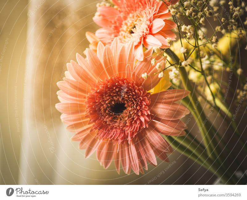 Pink gerbera daisy flowers bouquet pink mothers day wedding womens day background flowers day design pastel floral vintage summer texture lifestyle nature