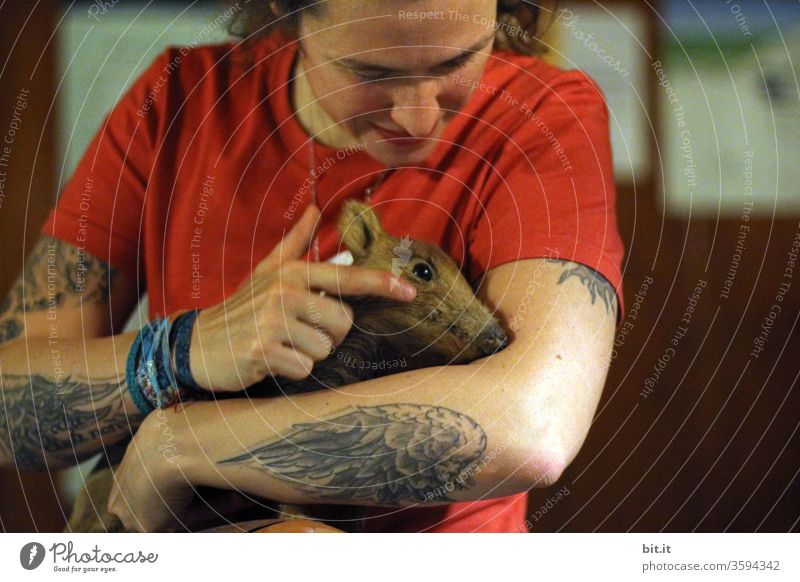 Young, animal-loving, tattooed, curious woman stroking young wild boar. Freshman with brown fur inside on the arm of a woman in red t-shirt. Front view, upper body of a natural adult with wing tattoo, many tattoos on the arm.