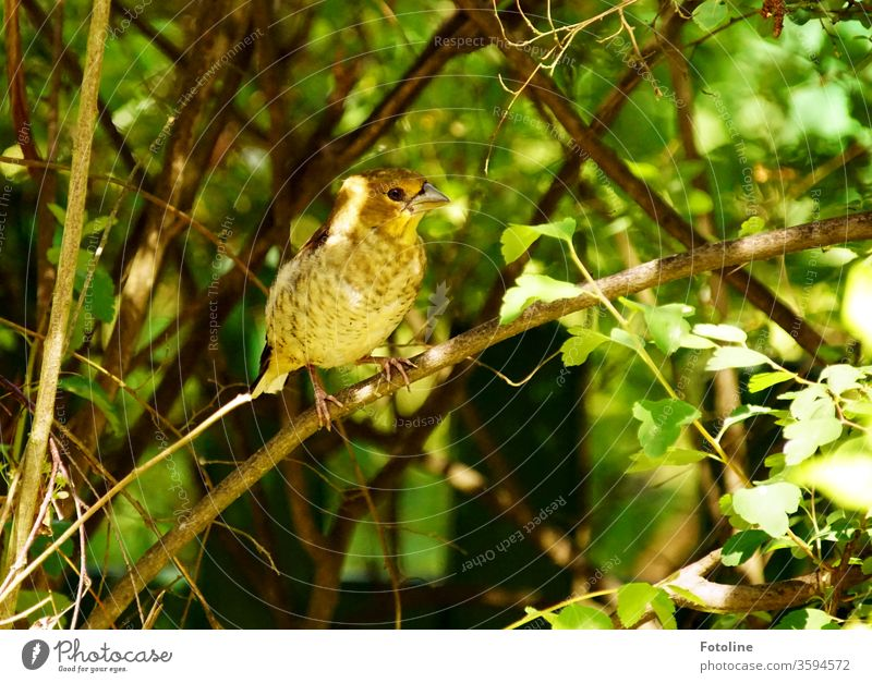A little girly strand sits on a branch in the green birds Animal Nature Colour photo Exterior shot 1 Wild animal Day Deserted Environment Shallow depth of field