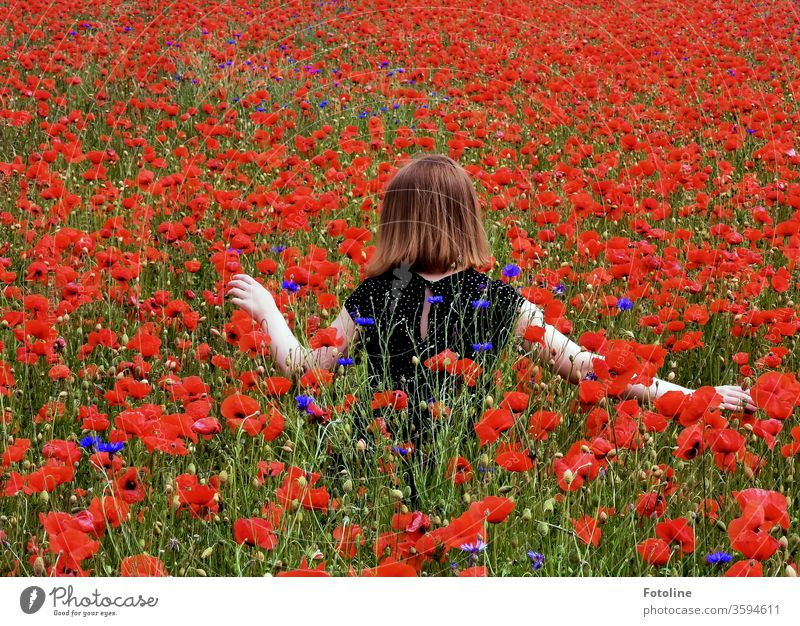 A young teenage girl roams through a poppy meadow. She is very careful not to bend any flowers. Poppy Poppy blossom Plant Red bleed Exterior shot Colour photo