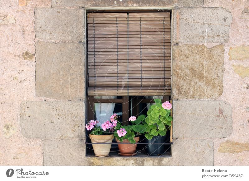 It was summer Vacation & Travel Tourism Summer Summer vacation Spain Living or residing Flat (apartment) House (Residential Structure) Flower Blossom Pot plant