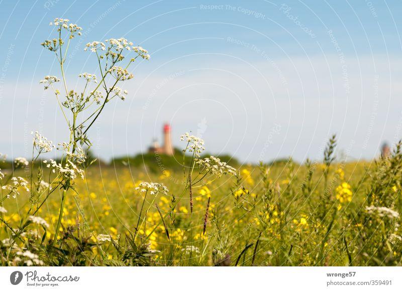 Blue Summer Plant Sun Landscape Environment Far-off places Meadow Grass Horizon Field Tourism Beautiful weather Lighthouse Canola Wild plant