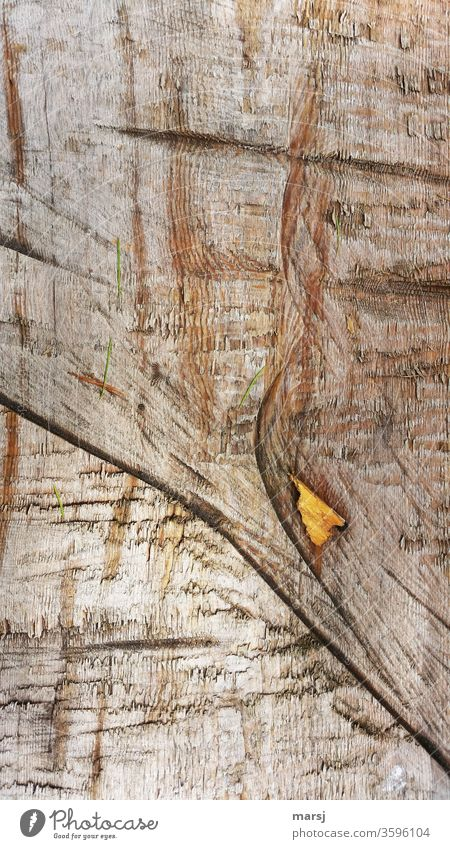 Wood on wood Wood grain Brown Force wooden background Structures and shapes strange peculiar Detail Colour photo natural Authentic Contrast Violations