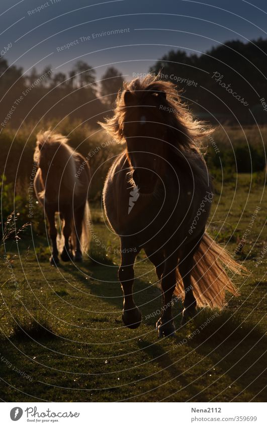Nature Summer Animal Meadow Baby animal Autumn Movement Spring Friendship Together Gold Wind Walking Beautiful weather Speed Happiness
