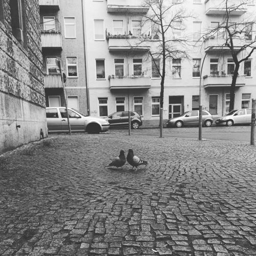 Two doves on cobblestone pigeons Cobblestones Town Neukölln Berlin Street Love Affection