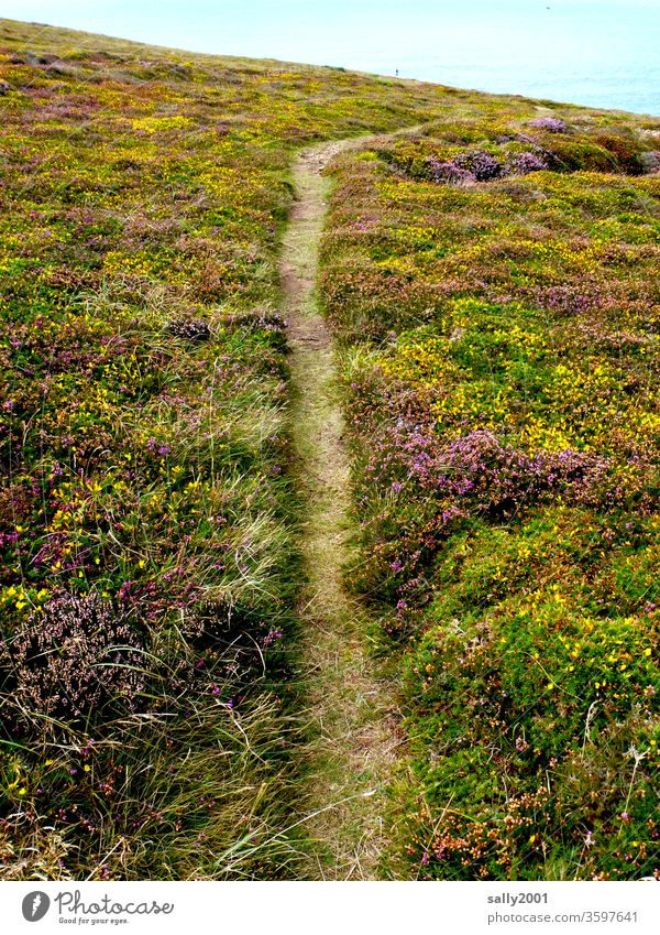 beaten path Trail off Lanes & trails Heathland Heather family Erika Broom Coast Hiking hiking trail tranquillity Loneliness Landscape
