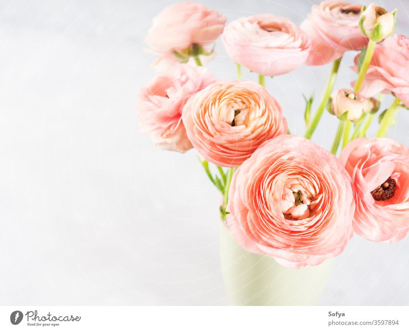 Beautiful pink ranunculus bouquet flower spring greeting card beautiful blossom gift nature anniversary bunch decoration floral love green background