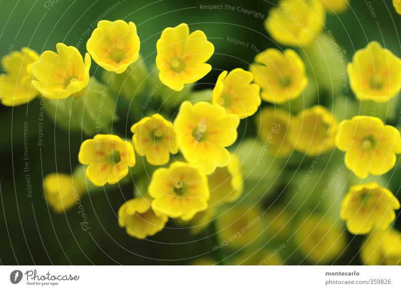 Nature Green Plant Flower Leaf Environment Yellow Grass Spring Small Blossom Natural Authentic Fresh Simple Soft