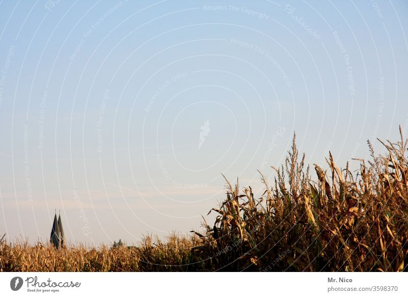 Architecture and nature I Leave the church in the village Nature Plant Field Church Church spire Maize field Sky Religion and faith Cloudless sky