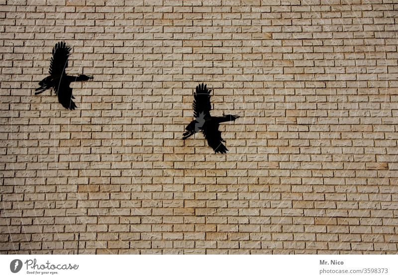 Art on building I Swifts House (Residential Structure) Migratory bird Flying Manmade structures Animal Wall (barrier) Wall (building) Bird Building metal figure