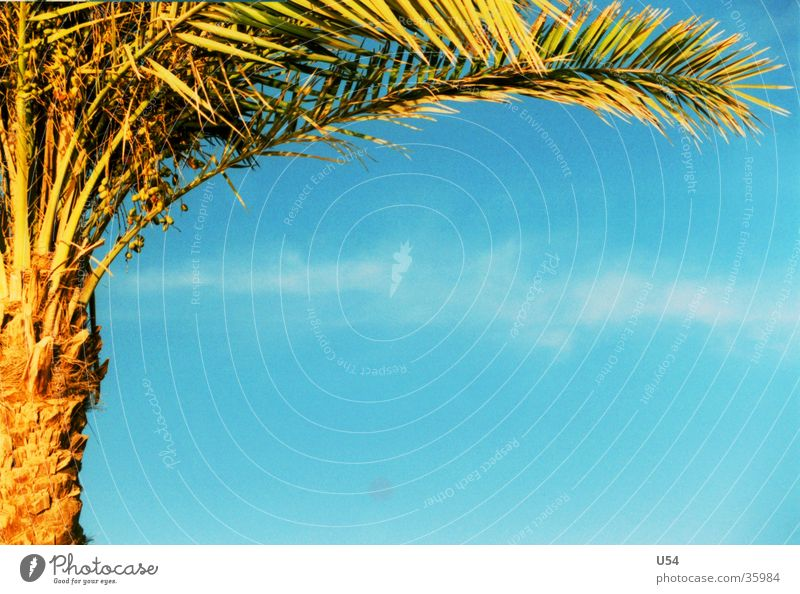 Sky Water Vacation & Travel Sun Beach Relaxation Warmth Contentment Physics Palm tree