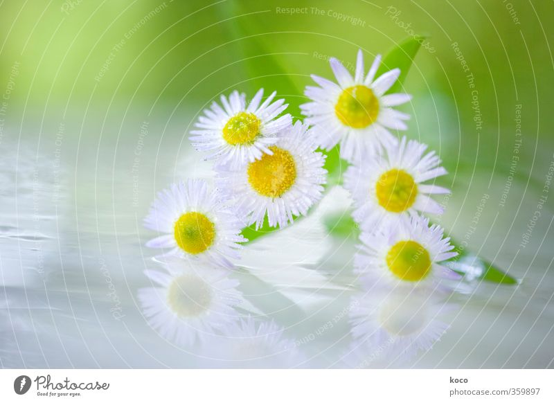 Nature Green White Summer Plant Sun Flower Leaf Yellow Spring Happy Blossom Natural Idyll Glittering Glass
