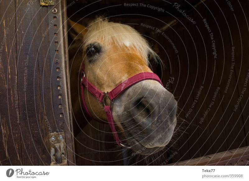 Joy Animal Life Friendship Leisure and hobbies Authentic Horse Farm animal Barn