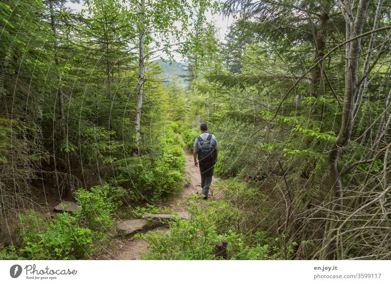 A man walks through the green forest Hiking Forest forest path hiking trail hike Relaxation Nature Man hikers Palatinate forest Summer Vacation & Travel