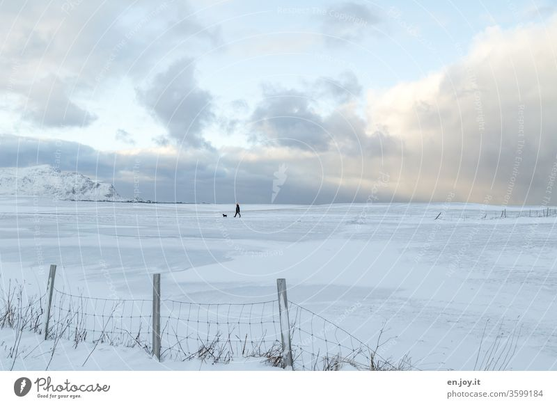 Man with dog walks in winter landscape over fields with snow, fenced in by a fence Winter North Norway Scandinavia Lofotes Snow wide Horizon To go for a walk