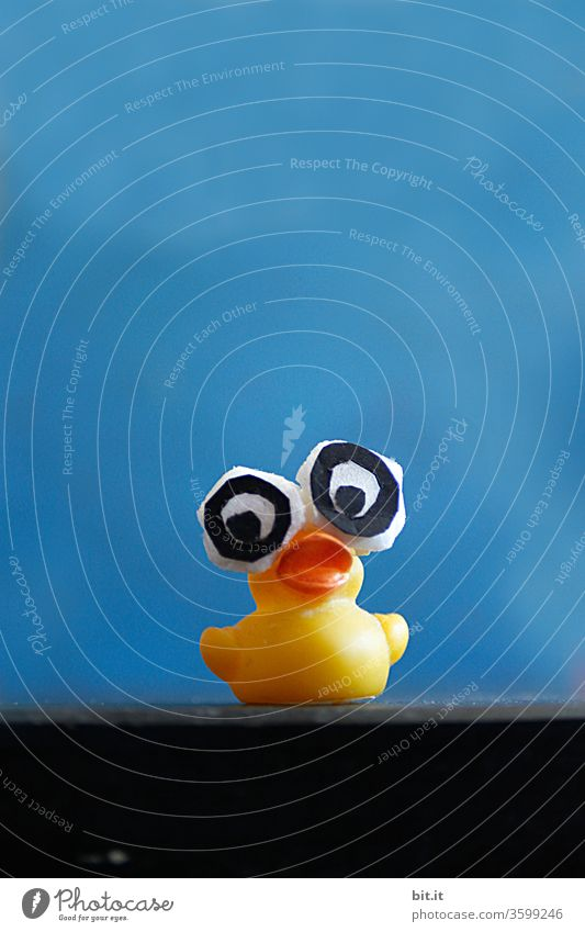 Baywatch... Duck Rubber Yellow squeaky Quitscheente Bathtub Squeak duck Eyes peer great big eyes Toys Swimming & Bathing Water Playing Infancy Blue Funny Cute