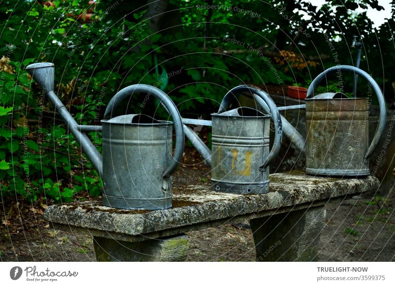 old | Three older watering cans made of zinc plate stand ready for use on an old moss-covered stone bench in front of a dark green hedge Cemetery grave care