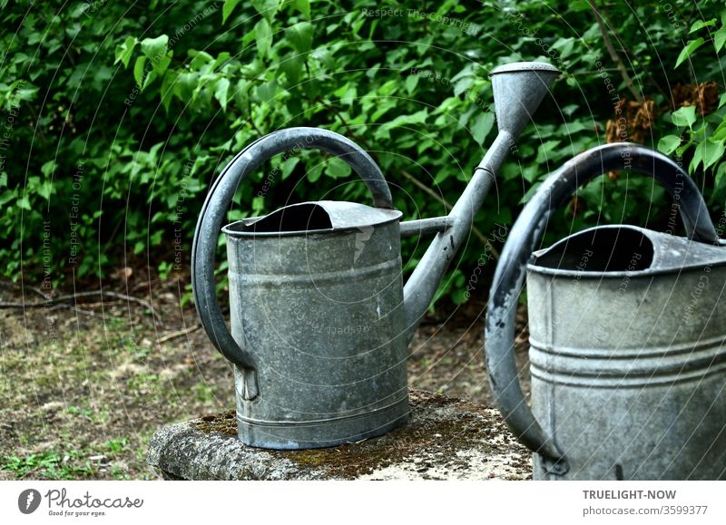 old | but still in use are two grey watering cans made of zinc sheet metal, beautifully designed and ready for use on an old moss-studded stone bench in fine contrast to the green hedge in the background