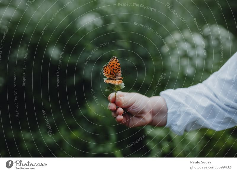 Child hand holding butterfly Hand Butterfly butterflies Insect Nature Environment Environmental protection Animal Exterior shot Close-up Colour photo Day Green