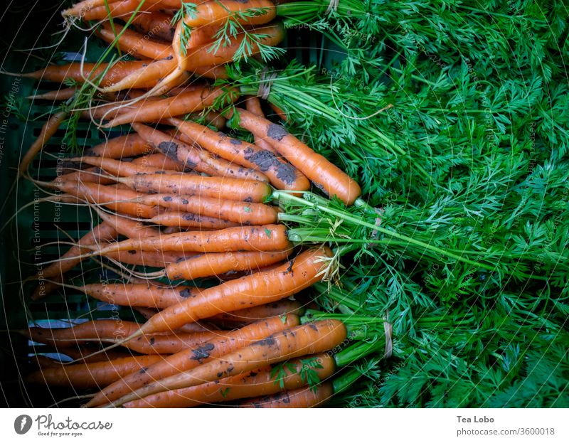 carrot carrots Marketplace Organic produce Vegetable Vegetarian diet Vegan diet Healthy Delicious Fresh Food Eating Lunch Salad Fasting