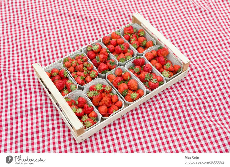 Strawberries on a checked cloth Strawberry strawberry box of strawberries Berries fruit fruits Fresh Picked Lawn green Nature Rag Blanket career red chequered