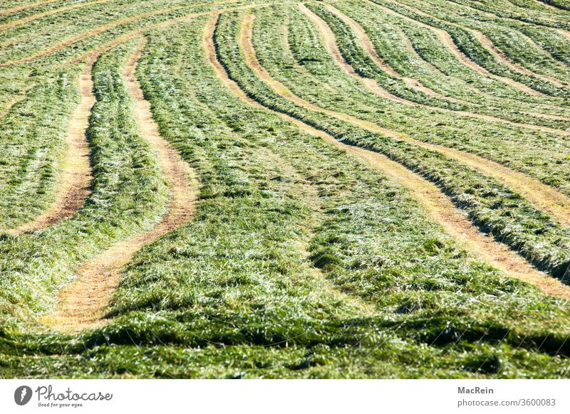 Tire tracks on a meadow Arable land Skid marks tractor tracks Meadow Agriculture agrarian Agricultural industry agrarian country Exterior shot