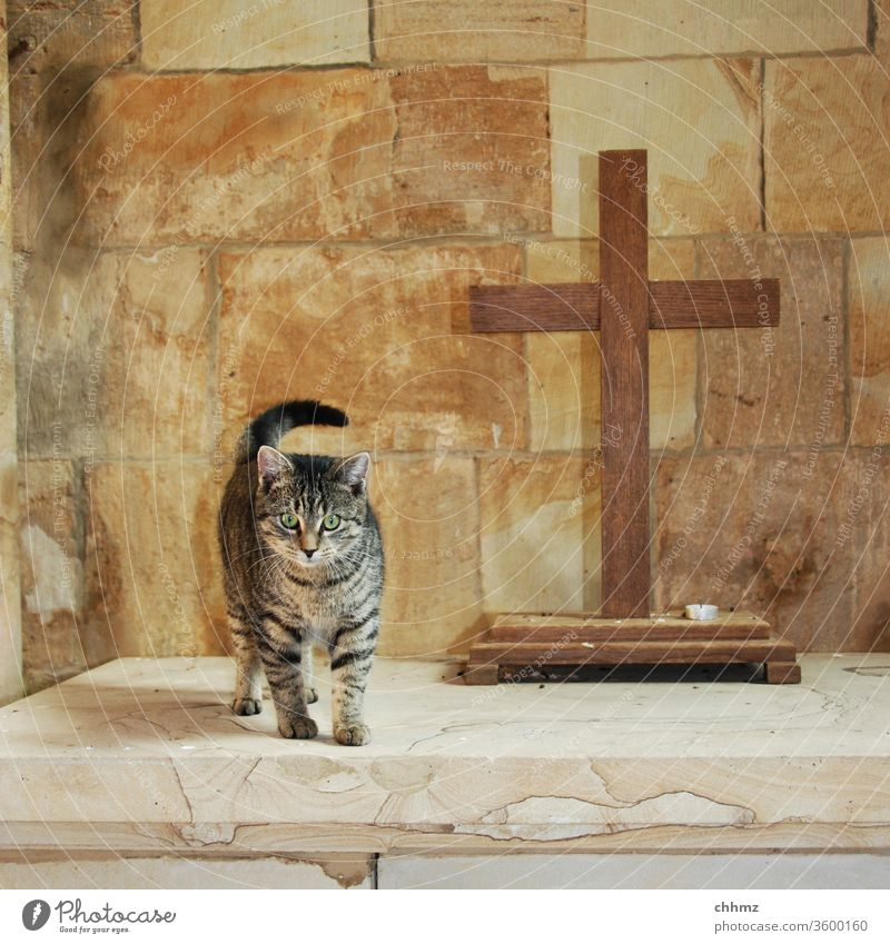 Church Cat Altar Crucifix Chapel hangover Deserted Religion and faith shoulder stand Sandstone Christian cross Symbols and metaphors inquisitorial Christianity